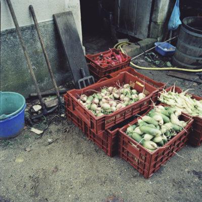 Photographe culinaire professionnelle, cageots de légumes